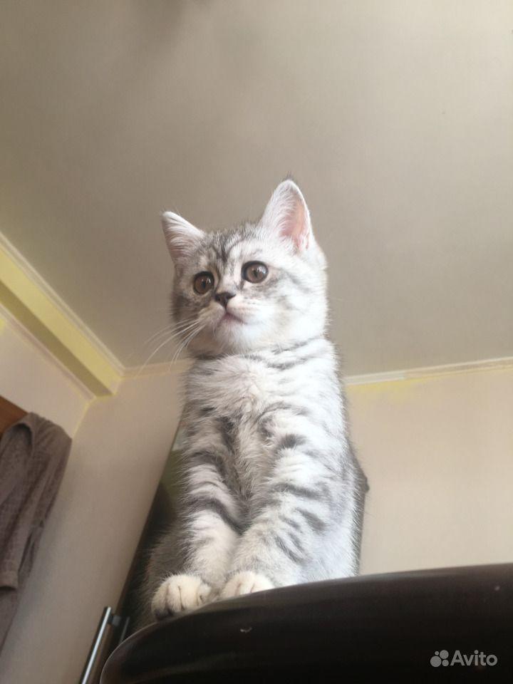 Котята в Сургуте - фотография № 2