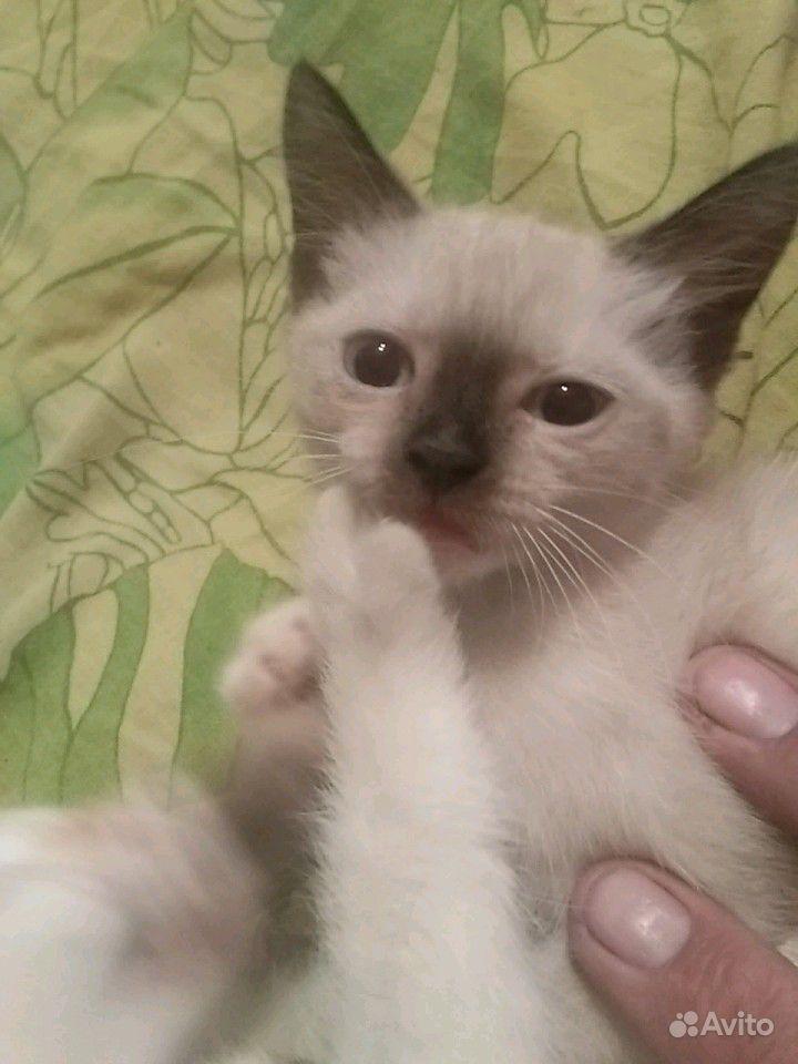 Котята 2 месяца отдадим бесплатно в добрые руки в Барнауле - фотография № 2