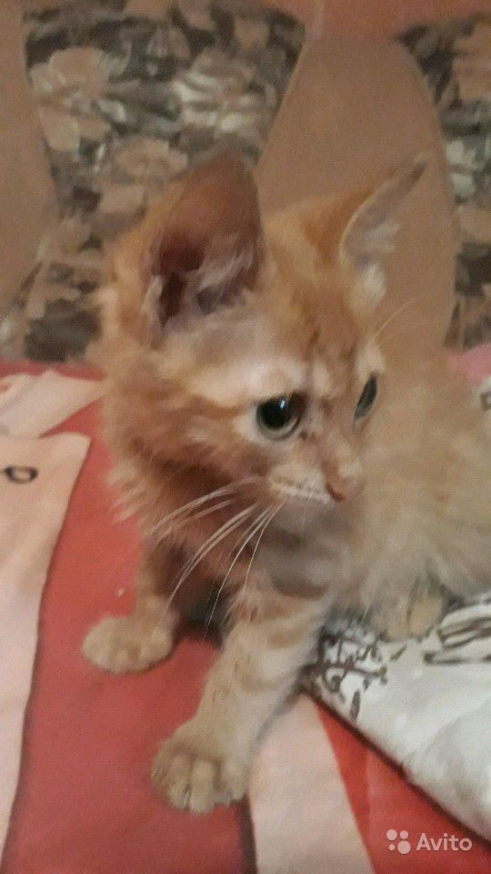 Родаём милых котят в добрые руки мальчик и девочка