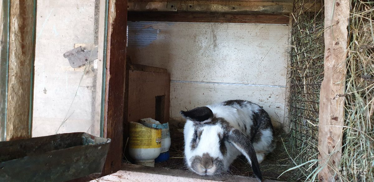 25 кролики +клетки