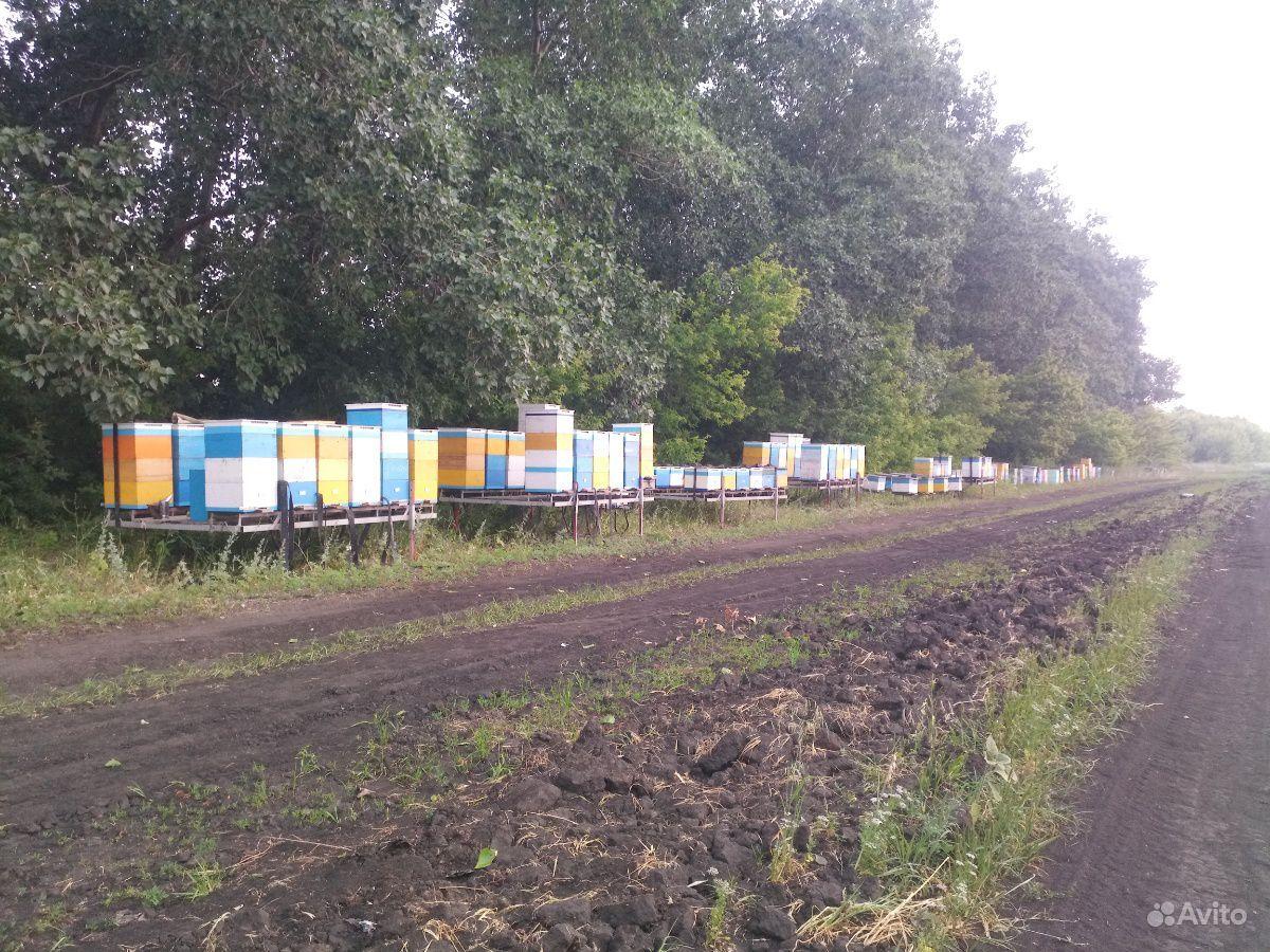 Пчеловодческая платформа-модуль
