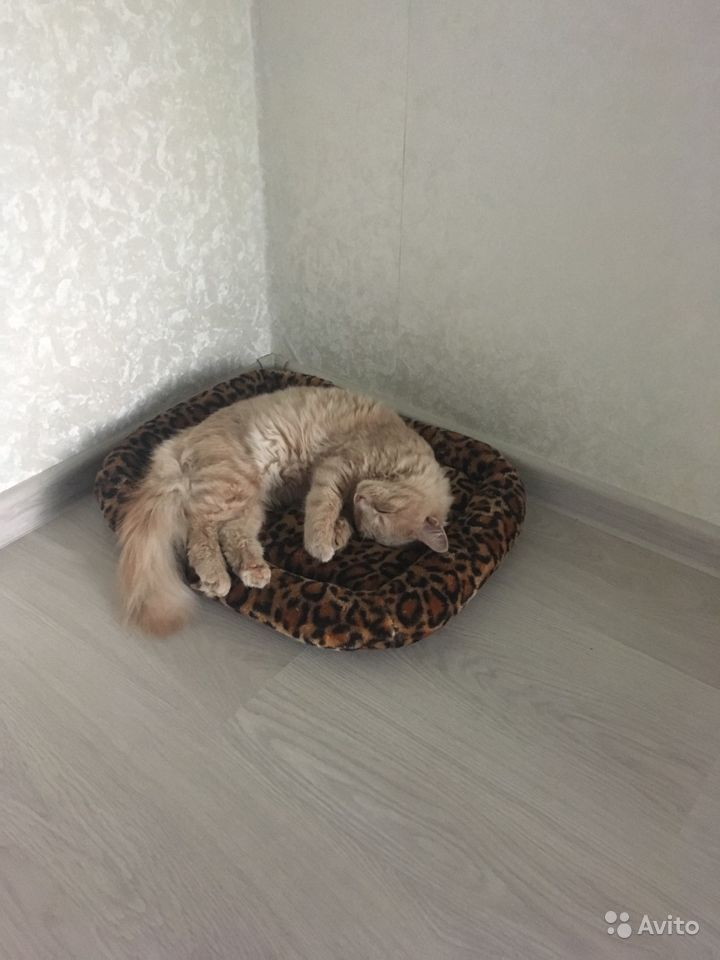 Кот ищет хороших хозяев