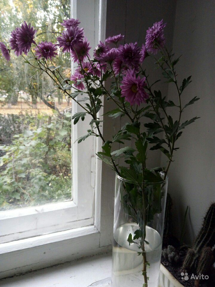 Хризантема белая и сиреневая, мята, шалфей и мн-е купить на Зозу.ру - фотография № 3
