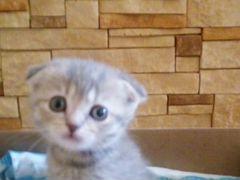 Возьму в добрые руки котенка-девочку