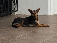 Собачка ищет дом