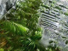 Трава в аквариум