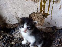 Отдам милых котят возраст 1 мес