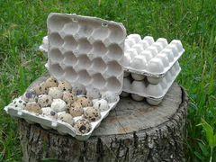 Отправка инкубационного яйца перепелов