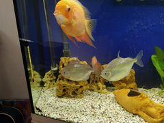 Аквариумные рыбы: