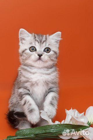 Авито котенок в саратове