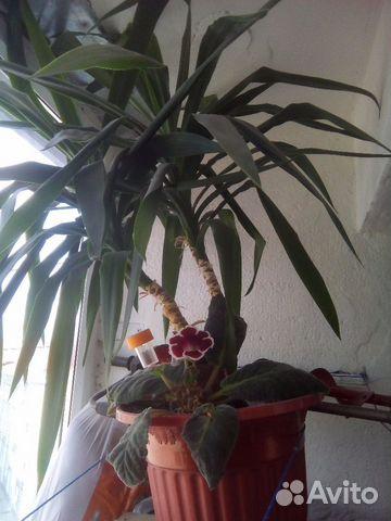 Комнатные цветы авито курган