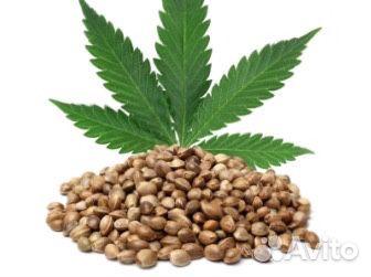 Семена конопли в челябинске купить как гашиш и марихуана влияют на потенцию