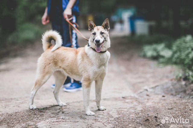 Джерри - идеальная собака в добрые руки купить на Зозу.ру - фотография № 1