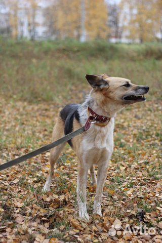 Собака Мия купить на Зозу.ру - фотография № 3