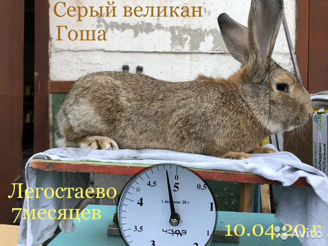 Rabbits buy 10