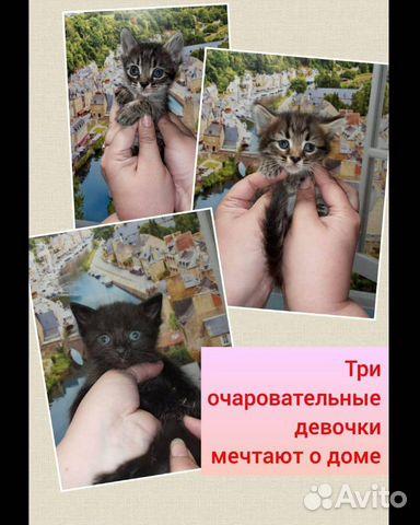 Кошка 89170821738 купить 1