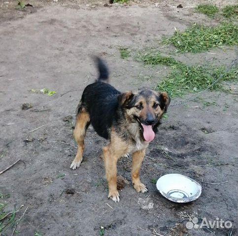 Дара, собака-позитив, стерилизована купить 1