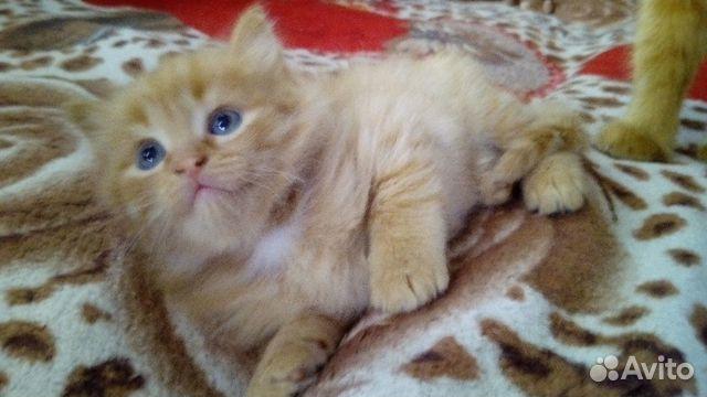 Кошечка в добрый дом купить 1