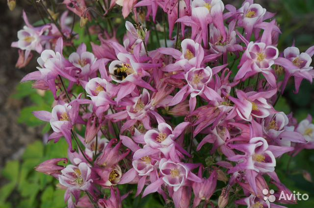 Цветы садовые купить 3