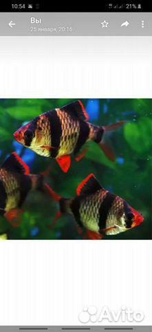 Рыба 89511532445 купить 3