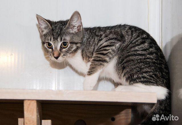 Котенок Нюша ищет дом