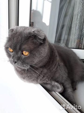 Отдам кота  89109182716 купить 6