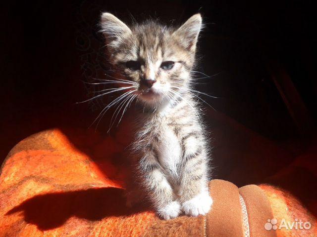 Милые котята ищут родителей  89992093964 купить 1