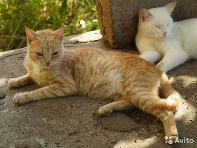 Молодой кошечке Злате нужен новый дом