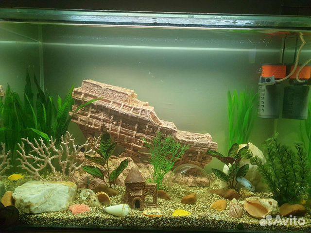 Аквариум с рыбками и декорациями  89196043887 купить 1