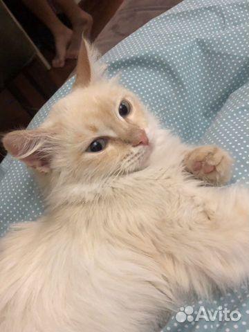 Кошка  89884680065 купить 1