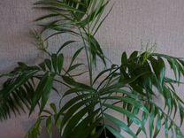 Шикарная пальма,доставка