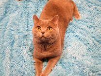 Кот готов для вязки