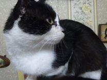 Котик кляксик ищет дом