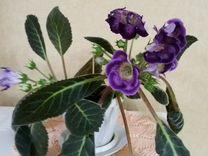 Комнатный цветок Глоксиния