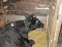 Молоко коровье домашнее