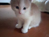 Персиковый котик