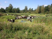 "Молочная ферма ""От зернышка до прилавка"""