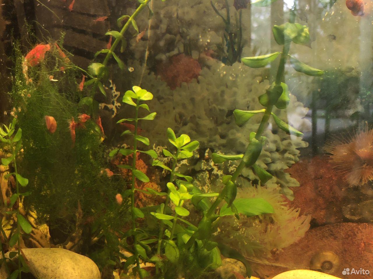 Аквариумные растения рыбы  89207067141 купить 1